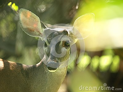 Sunplay in deer image
