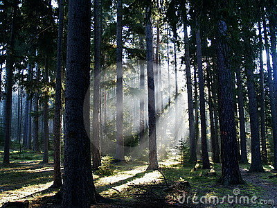 Sunray in forest