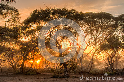 Sunrise in the Australian bush