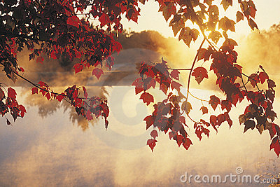 Sunrise Through Autumn Leaves