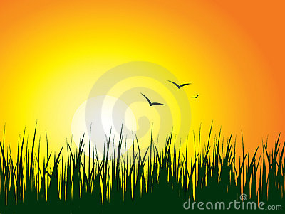 Sunrise Background Stock Photography - Image: 4337112