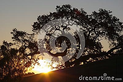 Sunrise on California hills