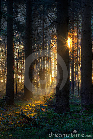 Sunrise in dark forest