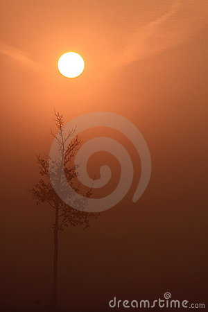 Sunrise with fog