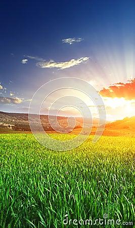 Sunrise in grean meadow