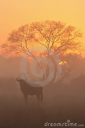 Free Sunrise In Sabi Sands Royalty Free Stock Photos - 5512818
