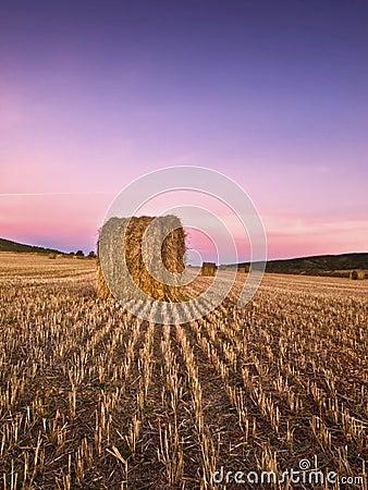 Sunrise in a mowed wheat field