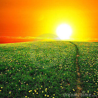 Free Sunrise On Dandelion Field Royalty Free Stock Image - 5438776