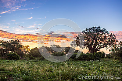 Sunrise over African savannah