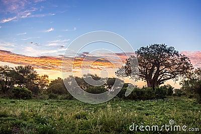 Sunrise over African savannah