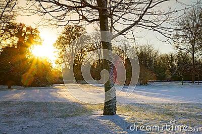 Sunrise over frozen park