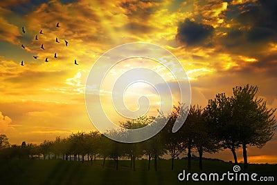 Sunrise Over Tree Line