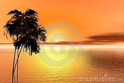 Sunrise. Palm
