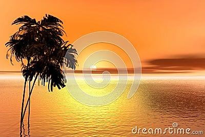 Sunrise. Palm