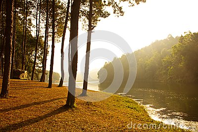 Sunrise at Pang-ung, pine forest park