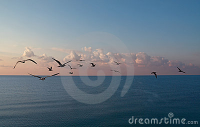 Sunrise sea and cormorants