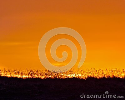 Sunrise and Sea Grass