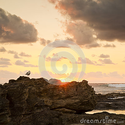 Sunrise Seagull On Rocks
