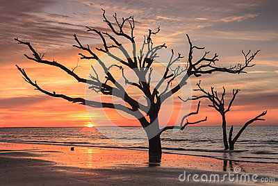 Sunrise Solitude Silhouette Tree South Carolina
