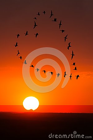 Free Sunrise, Sunset Love, Romance, Birds Royalty Free Stock Images - 118911599