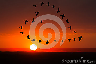Sunrise, Sunset Love, Romance, Birds Stock Photo