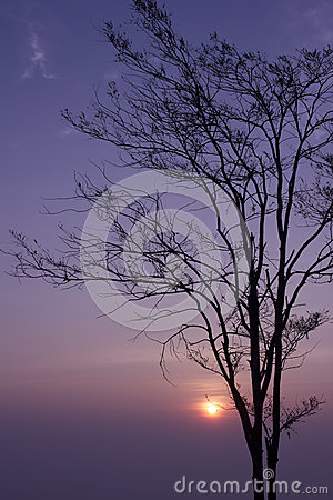 Sunrise trees at loei  Province in Thailand
