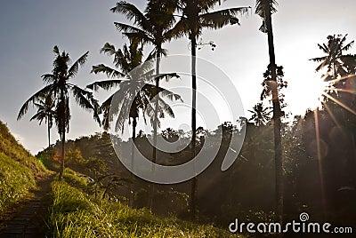 Sunrise in Ubud Bali, Indonesia