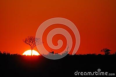 Sunrise in the wild