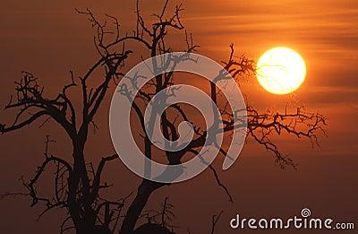 Sunrise in the winter