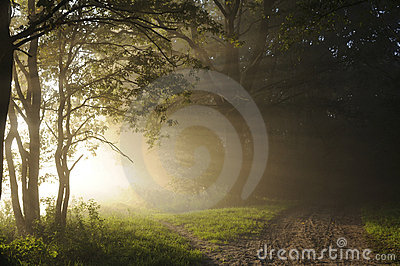 Sunrise in the woods