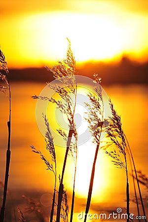 Free Sunset Royalty Free Stock Photos - 7320708