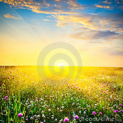 Free Sunset Above The Flowers Stock Photo - 12544340