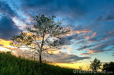 Sunset above the tree