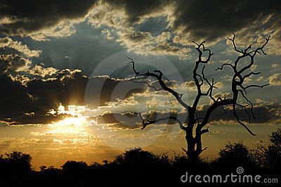 Sunset in the African bush (South Africa)