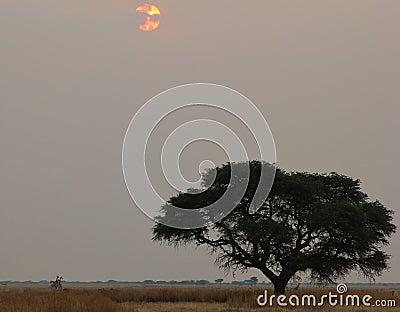 Sunset - African Last Light and Giraffes