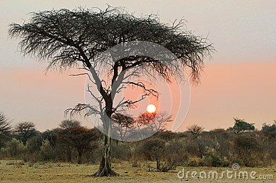 Sunset - African Mysteries