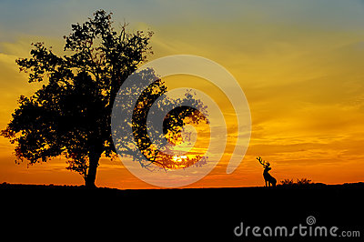 Sunset against three silhouette