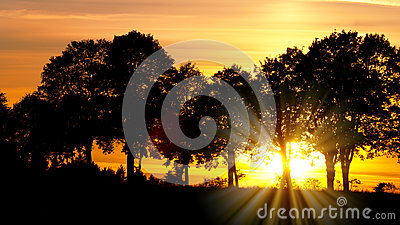 Sunset with alley of lime tree Stock Photo