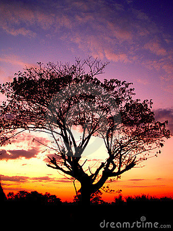 Free Sunset And Tree 01 Royalty Free Stock Photos - 1832358
