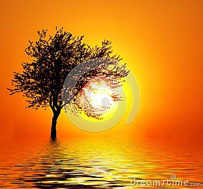 Sunset as a fruit
