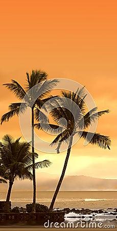 Free Sunset At Oahu, Hawaii Stock Image - 1637451