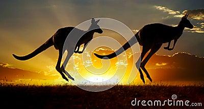 Sunset Australian outback kangaroo