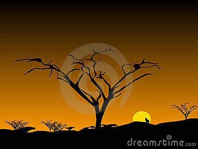 Sunset with Bare Trees