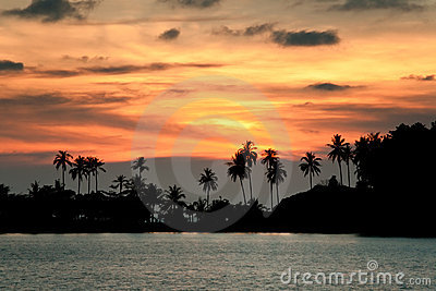 Sunset beach with palm trees