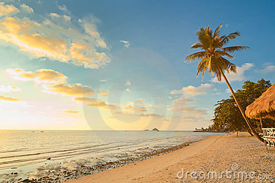 Sunset beach with palm trees and bungalow