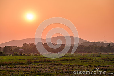 Sunset behind the cornfield