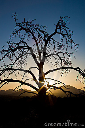 Sunset behind a dead tree