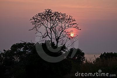 Sunset behind a lone tree