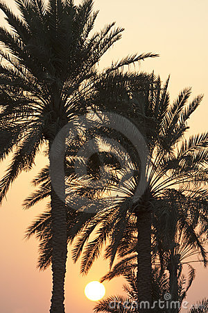 Sunset Behind Palm Trees