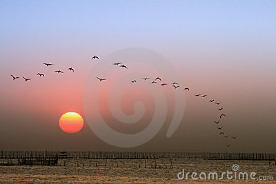 Sunset, birds flying